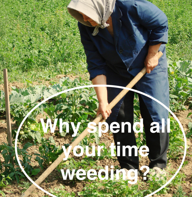 Minimal Maintenance Gardening–Don't spend your time weeding but enjoying your garden or yard!
