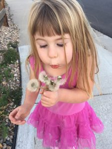 Little girl blowing on dandelion EcoTurf of Northern Colorado