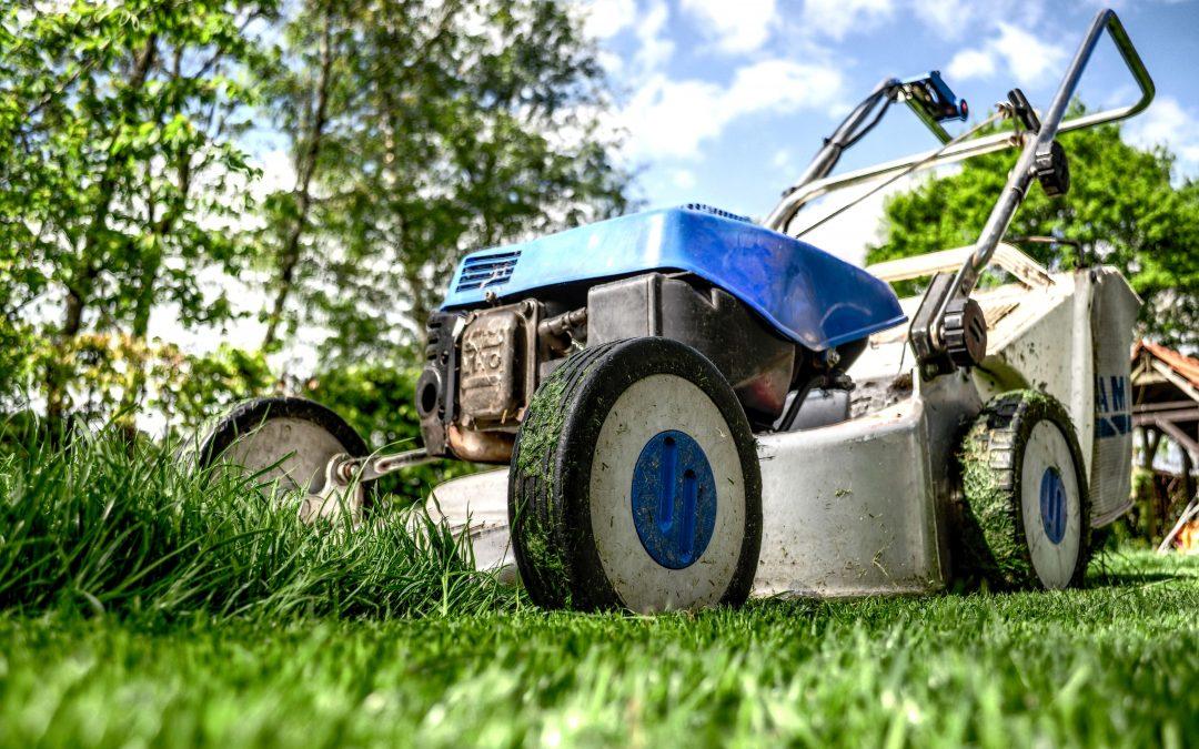How Short Should I Cut My Grass?