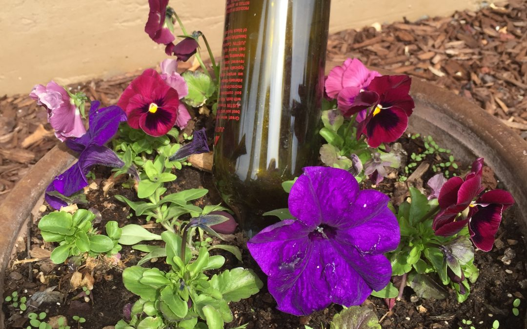 Simple Gardening Idea: Upcycling Used Wine Bottles As Self-Waterers