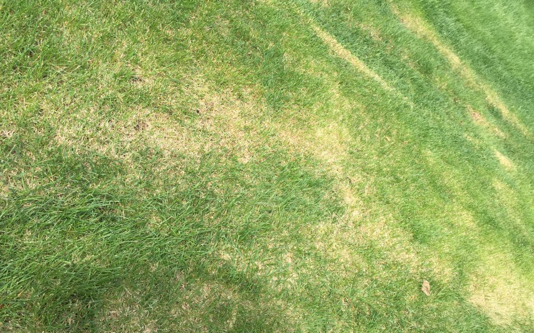 Got Heat Stress? 5 Tips To Get Your Lawn Lush and Green Again