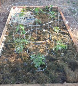 Gardening EcoTurf of Northern Colorado