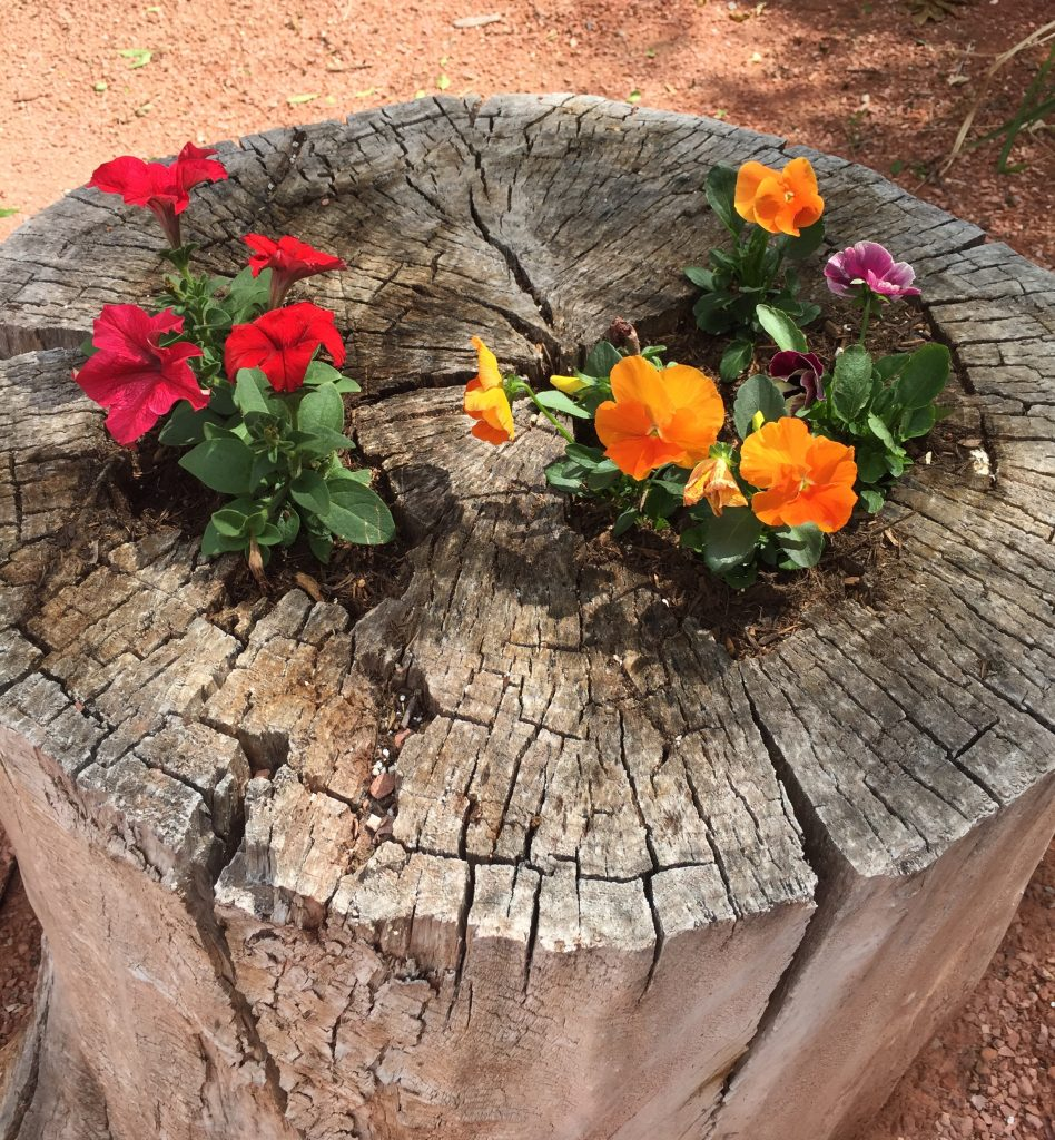 Fun way to upcycle some old stumps!