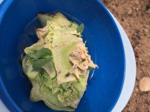 Cabbage EcoTurf of Northern Colorado