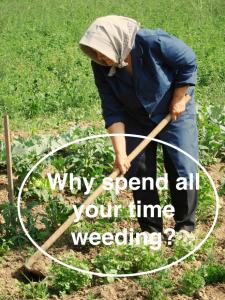 Old Woman Weeding EcoTurf of Northern Colorado