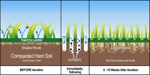 Aeration Infographic EcoTurf of Northern Colorado