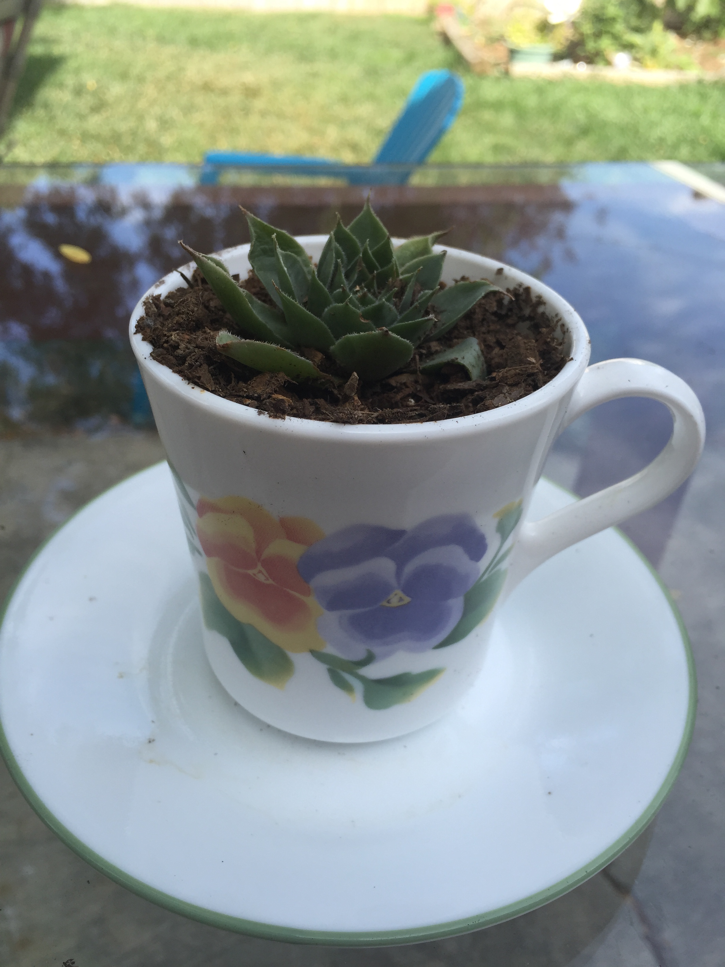 Upcycling my plants and dishes!