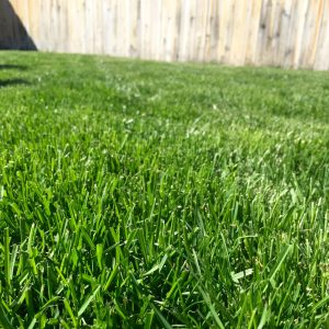 Grass EcoTurf of Northern Colorado