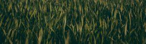 EcoTurf of Northern Colorado Grass