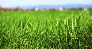 Lawn Fertilization EcoTurf of Northern Colorado