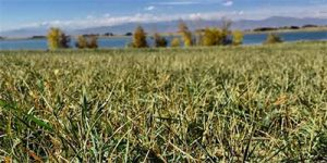 Native Area Management EcoTurf of Northern Colorado
