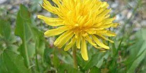 Weed Control EcoTurf of Northern Colorado