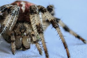 Spider EcoGuard Insect Control EcoTurf of Northern Colorado
