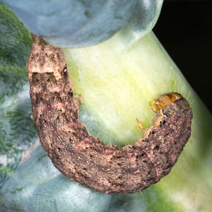 Cutworm EcoTurf of Northern Colorado
