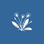 Dandelion Icon EcoTurf of Northern Colorado