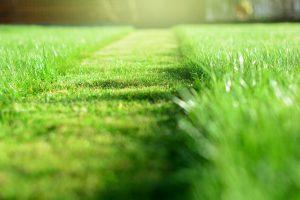 Strip of grass mowed too short.