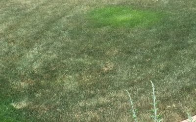Brown Spot Diagnosis and Irrigation Info from Colorado State University
