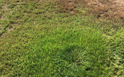 Irrigation Issues: Sunken Sprinkler Heads