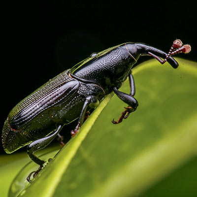 Lawn Problems EcoTurf Insect Control